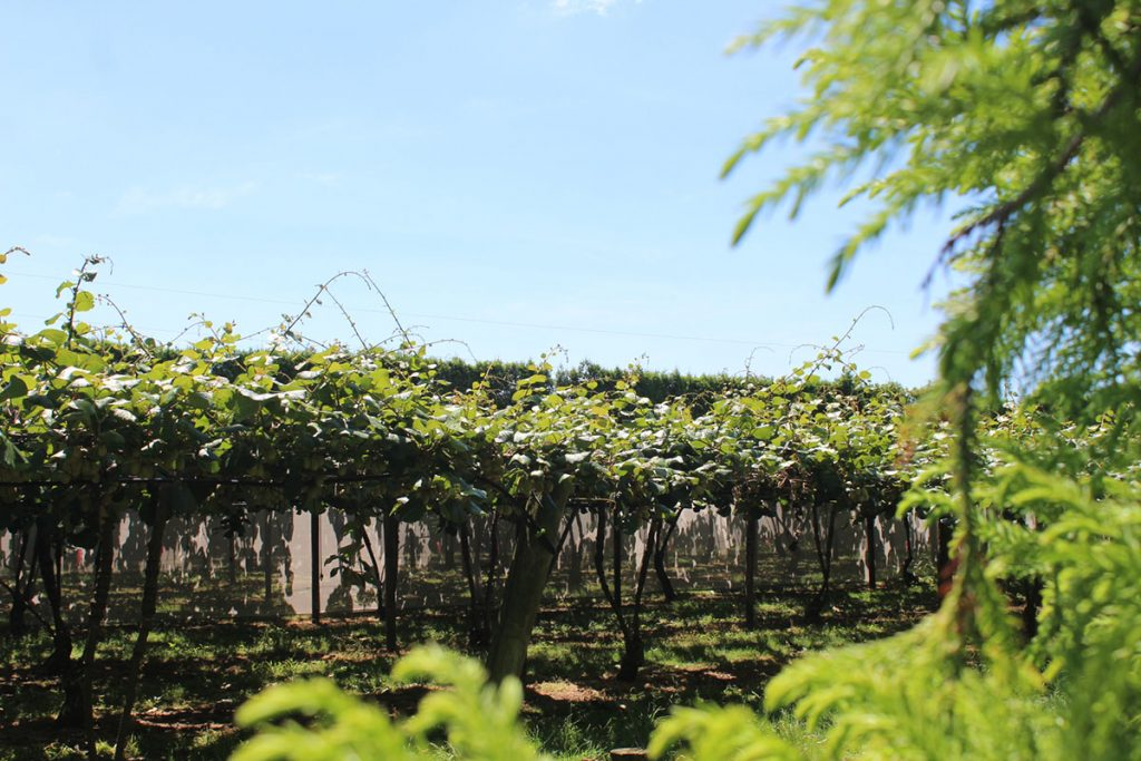 Matapihi Orchard